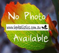 Bulbine Bulbosa – Native Leek (seed)