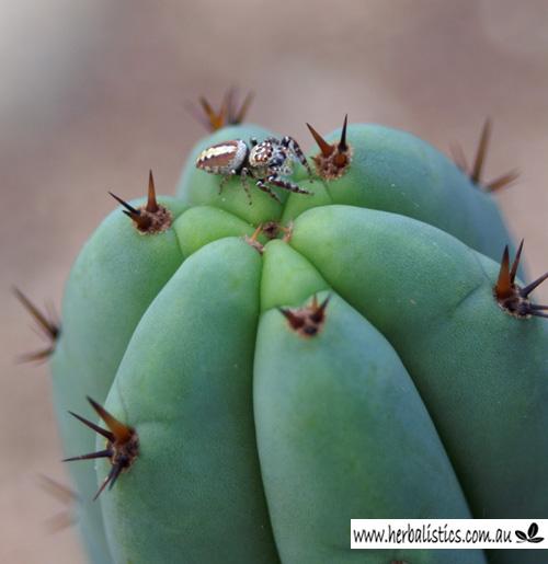HB02 Spider