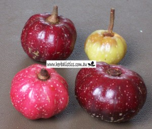 Galbulimima baccata fruit