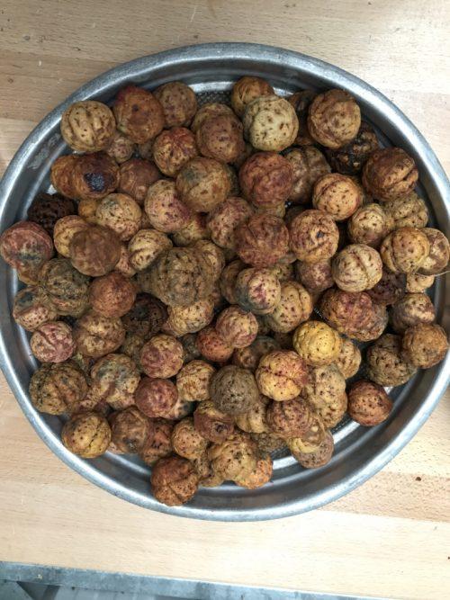 Terminalia Cunninghamii – Pindan Walnut (seed)