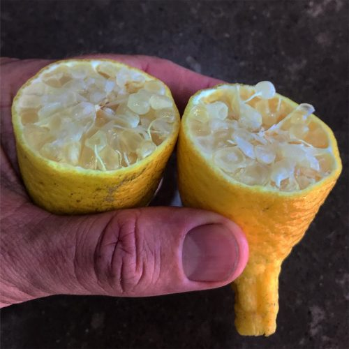 Fingerlemon