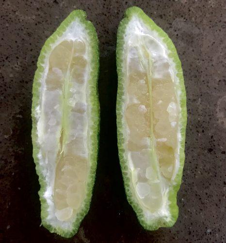 Citrus Garrawayi