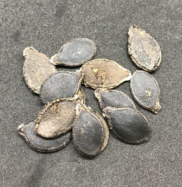 Cucurbita ficifolia