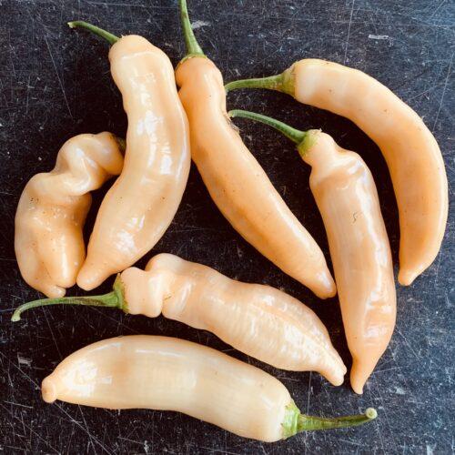 Capsicum Baccatum 'Sugar Rush Peach' (seed)