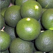 Citrus Sudachi – Sudachi (plant)
