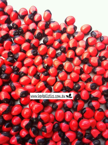 Abrus Precatorius Ssp. Precatorius – Gidgee Gidgee (seed)