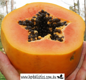 Carica Papaya – Red Papaya (seed)