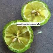 Citrus_australis2