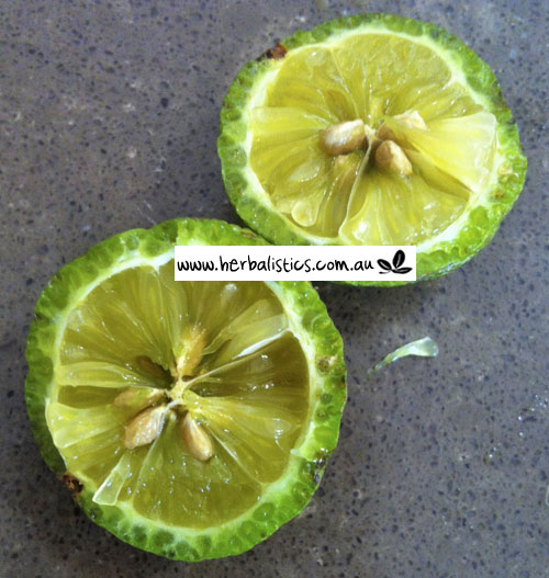 Citrus Australis – Gympie Lime (seed)