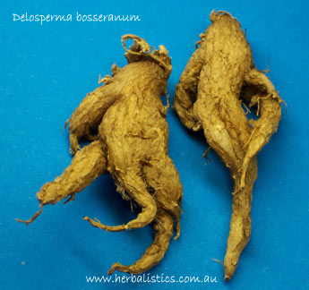 Delosperma Bosseranum (dried Herb) 1g