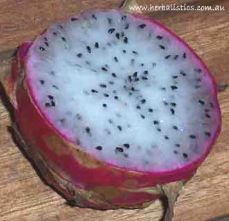 Hylocereus Undatus – Dragon Fruit (seed)