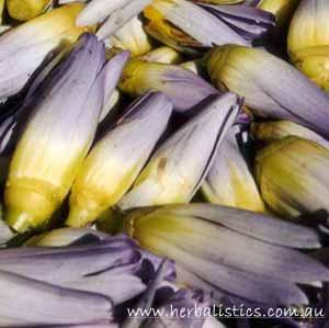 Blue Lotus Flowers (Nymphaea Caerulea) 10g