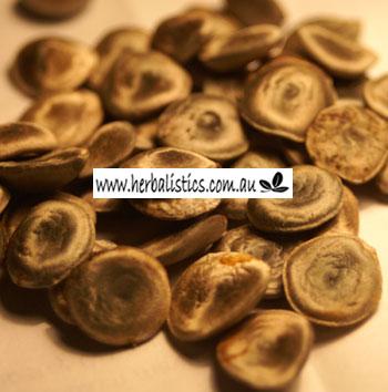 Strychnos Lucida – Strychnine Bush (seed)